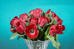 Close up of bouquet of red tulips with water splashes in vase. Royalty Free Stock Photo
