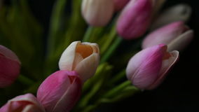 Close-up of a bouquet of tulips on a dark background. Close-up of a bouquet of tulips stock video footage