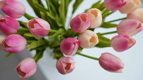 Close-up of a bouquet of tulips on a light background. Close-up of a bouquet of tulips stock video footage