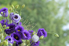 Close-up bouquet of violet flowers Stock Photo
