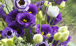 Close-up bouquet of violet flowers Royalty Free Stock Images
