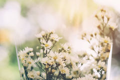 Close up bouquet white Gypsophila flower with sunlight. Close up bouquet white Gypsophila flower with sunlight Stock Photography