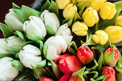 Close-up of bouquets of colorful tulips, red, yellow, white in b Royalty Free Stock Images