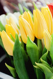 Close-up of bouquets of colorful tulips, red, yellow, white in b Stock Images