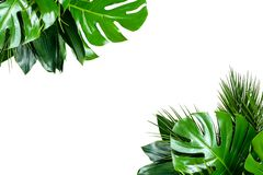 Close up of bouquets of various fresh tropical leaves on white background