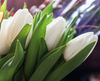Close-up of bouquets of white tulips, in blur Stock Image