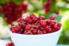 Close up of a bowl of red currant Royalty Free Stock Photography