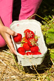 Close-up of box with fresh strawberries Royalty Free Stock Photography