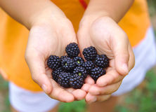 Close Up Of boy Holding some Freshly Picked royalty free stock photo