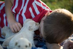 A boy getting a puppy kiss. A close up of a boy laying on a blue and white checkered blanket getting a kiss from a cute little tan puppy stock photography