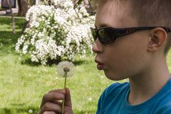 Close-up of a boy in sunglasses and dandelion. royalty free stock photo