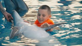 Boy swimming in a pool with a dolphin stock video footage