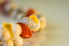 Close-up of a bracelet of shells and red beads on a white backgr Stock Image