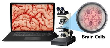 Close up of brain cells with mircoscope and laptop. Illustration vector illustration