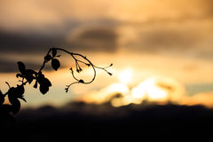 Close-up of branch against of skyscape Royalty Free Stock Images