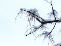 Close-up of a branch covered of ice-Stock photos Stock Photography