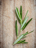 Close up branch of fresh rosemary  for seasoning concept on rust Stock Photography
