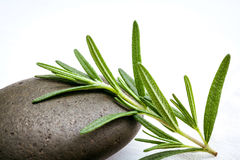 Close up branch of fresh rosemary on spa stone  setup on white w Stock Images