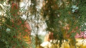 Close-up of a branch and a juniper fruit on a background of a blurry carousel is spinning around. 4k, slow-motion stock video footage