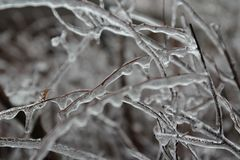 Ice covered branches Royalty Free Stock Photo