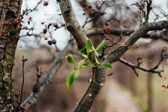 Close-up of Branches of Tree Royalty Free Stock Photo