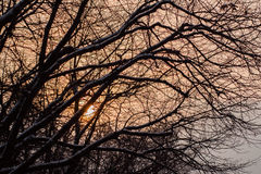 Close-up branches of tree covered with snow against a stunning sunset , orange tones, winter background, Christmas, New Royalty Free Stock Photos
