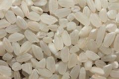 Close-up branco do macro do arroz da curto-grão imagens de stock royalty free