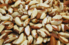 Close up of brazil nut Royalty Free Stock Image