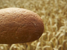 Close up of Bread before Cornfield. Bread before Cornfield, agriculture and traditional food Stock Photo