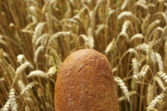 Close up of Bread before Cornfield. Bread before Cornfield, agriculture and traditional food Royalty Free Stock Images