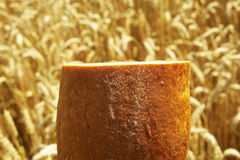 Close up of Bread before Cornfield. Bread before Cornfield, agriculture and traditional food Royalty Free Stock Photos