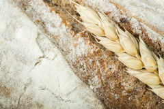 Close up Bread and wheat cereal crops Royalty Free Stock Images