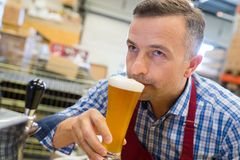 Close-up brewer smelling beer at brewery factory. Close-up of brewer smelling beer at brewery factory Royalty Free Stock Photo
