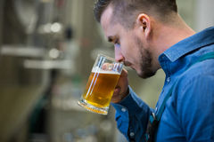 Close-up of brewer testing beer Royalty Free Stock Images