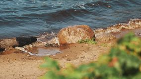 Close up of briar branches with stones and waves beating on shore on background stock video