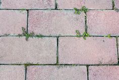 The texture of the stone. Background of brick paths. stock images
