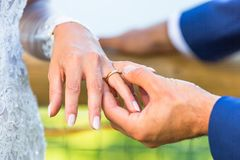 Close up of bride and groom hands. With wedding rings Royalty Free Stock Photography