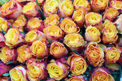 Close-up of bright bunch of freshly cut beautiful roses. Stock Images