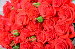 Close up of bright bunch of fresh beautiful red roses royalty free stock photography