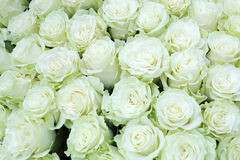 Close-up of bright bunch of freshly cut big white roses Royalty Free Stock Image