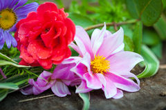 Close-up of bright colorful flowers Royalty Free Stock Photography