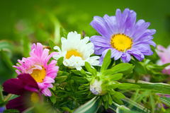 Close-up of bright colorful garden flowers Stock Photo