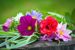 Close-up of bright colorful garden flowers Royalty Free Stock Image