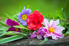 Close-up of bright colorful garden flowers Royalty Free Stock Photos
