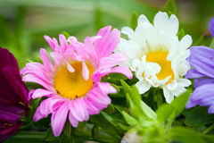 Close-up of bright colorful garden flowers Royalty Free Stock Images