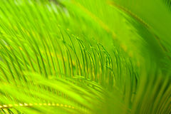 Close up of bright green tropical palm tree leaves Stock Images