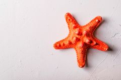Dried red sea starfish on white background stock images