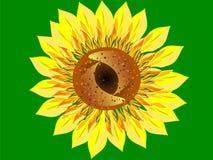 Close up brilhante do fundo do verde da flor do girassol Imagens de Stock Royalty Free