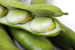 Close up of broad beans Royalty Free Stock Photography