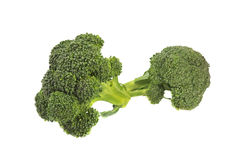 Close-up of broccoli sprout. Isolated over white Stock Image